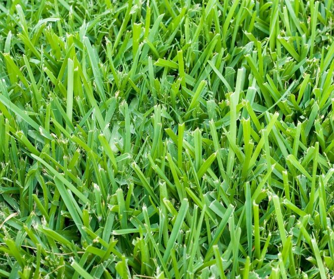 Six types of grass for florida lawns - Grass lawn types make the right choice ...