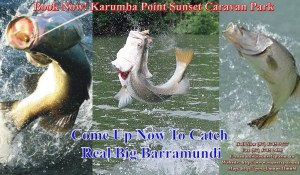 Karumba Point Sunset Caravan Park Accommodation Hotels Cabins Birds Watching Kangaroo Barramundi Fishing Fish Booking