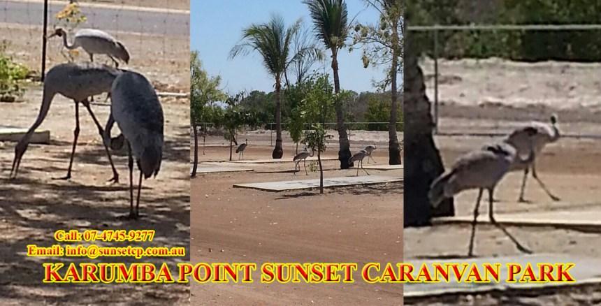 05-bird-karumba-point-sunset-caravan-park