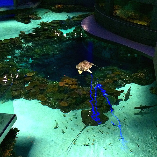 14 Reasons Why Your Kids Will Love The National Aquarium