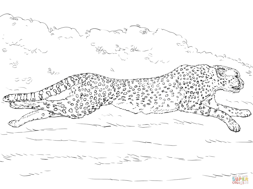 Cheetah Coloring Online. Click The Tanzanian Cheetah Coloring Pages ...