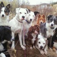 Multiple Dogs Household and Pack Dog Obedience