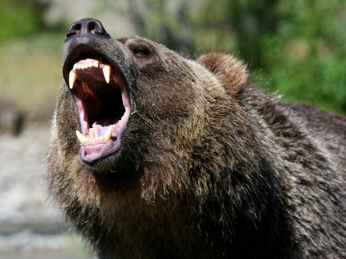 SureDividend Blog | Bear Market Stocks: The Dividend Investor\'s ...