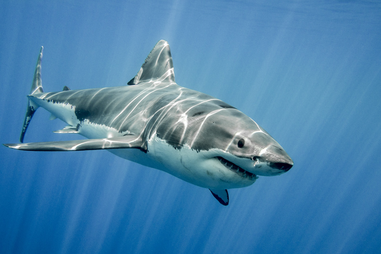 The most shark infested waters in the world