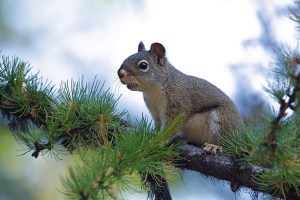 How to Squirrel Hunt with a Bow