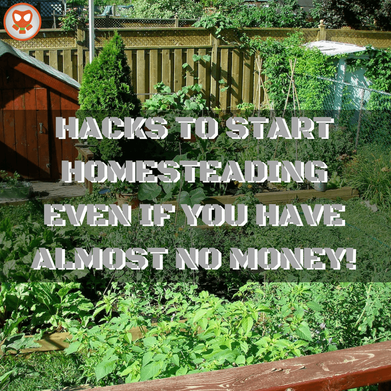 HACKS TO START HOMESTEADING EVEN IF YOU HAVE ALMOST NO MONEY!