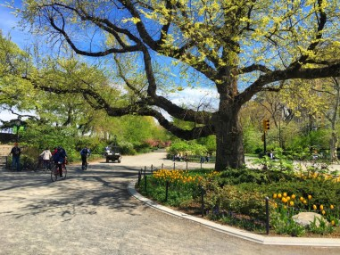 Central Park was showing off this morning.  I missed it so much.