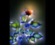 kirlian photo of flowers