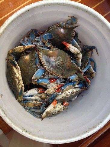 Blue crabs right off the boat