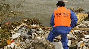 Chinese authorities remove dead pigs from Huangpu River