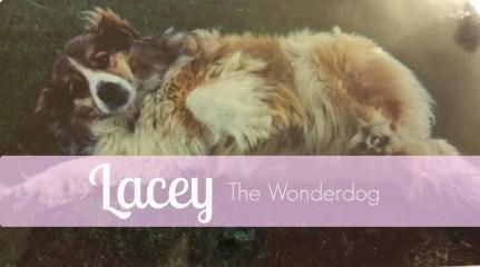 JEI {8}: Lacey the Wonderdog
