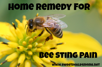 Home Remedy for Bee Sting Pain