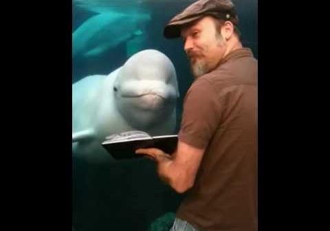 A Beluga With a Fine Taste in Art