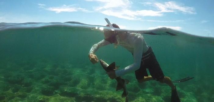 Video: Florida man rescues tangled juvenile shark