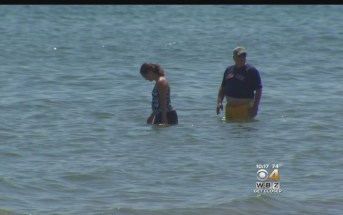 'Swim At Own Risk' After Possible Shark Sighting, Duxbury Harbormaster Says