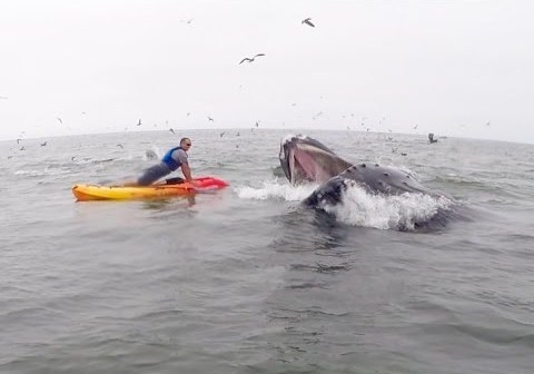 Humpback Whale Crashes 22 for 22 Pushup Challenge: PTSD Awareness