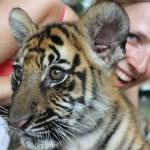 Tigergutt og meg