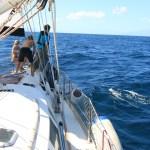 Velkomst delfiner på vei inn til Kap Verde