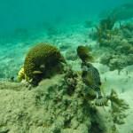 En av topp tre favorittfiskene, trunkfisken
