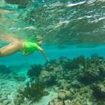 Grunt til korallreva, sa du?