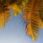 Palmesus og...