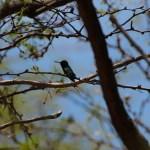 En liten my av en kolibri.