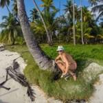 """Du vet du er på en øde øy når du må bruke AKkURATT denne palmen som """"antenne"""" for mobilen når du skal ringe hjem (mobilen måtte ligge akkuratt der du ser den på palma)"""