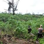 Dyrket mark med alskens buskevekster