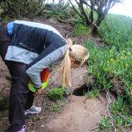 Førsteoffiser kikker etter fuglene som varmer seg og ruger i hulene på vei opp.