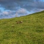 Haren uti gresset satt ikke og sov...