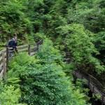 Turområdet i Glenariff