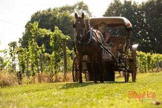 Bob the Carriage Horse
