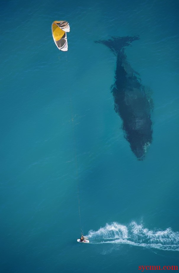 Largest Whale In the Ocean