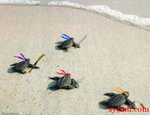 TMNT the real ones