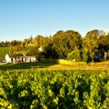 tempel-wines-overview