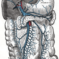 hepatic portal vein_wiki