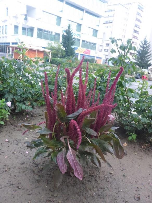 07/2014 Satu Mare