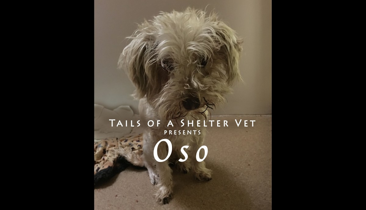 Oso's Dental Disease - The Root of the Problem