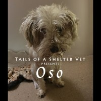 Oso Dental Disease Animal Neglect Dog Dental Cleaning Extractions Veterinary Anesthesia