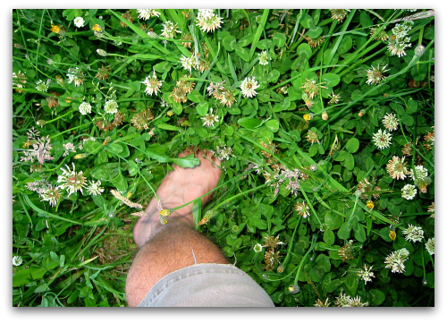 foot in tall clover