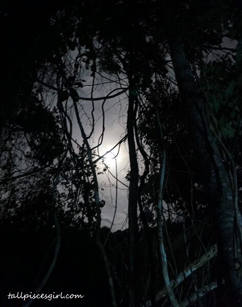A glimpse of the moon in the middle of the jungle