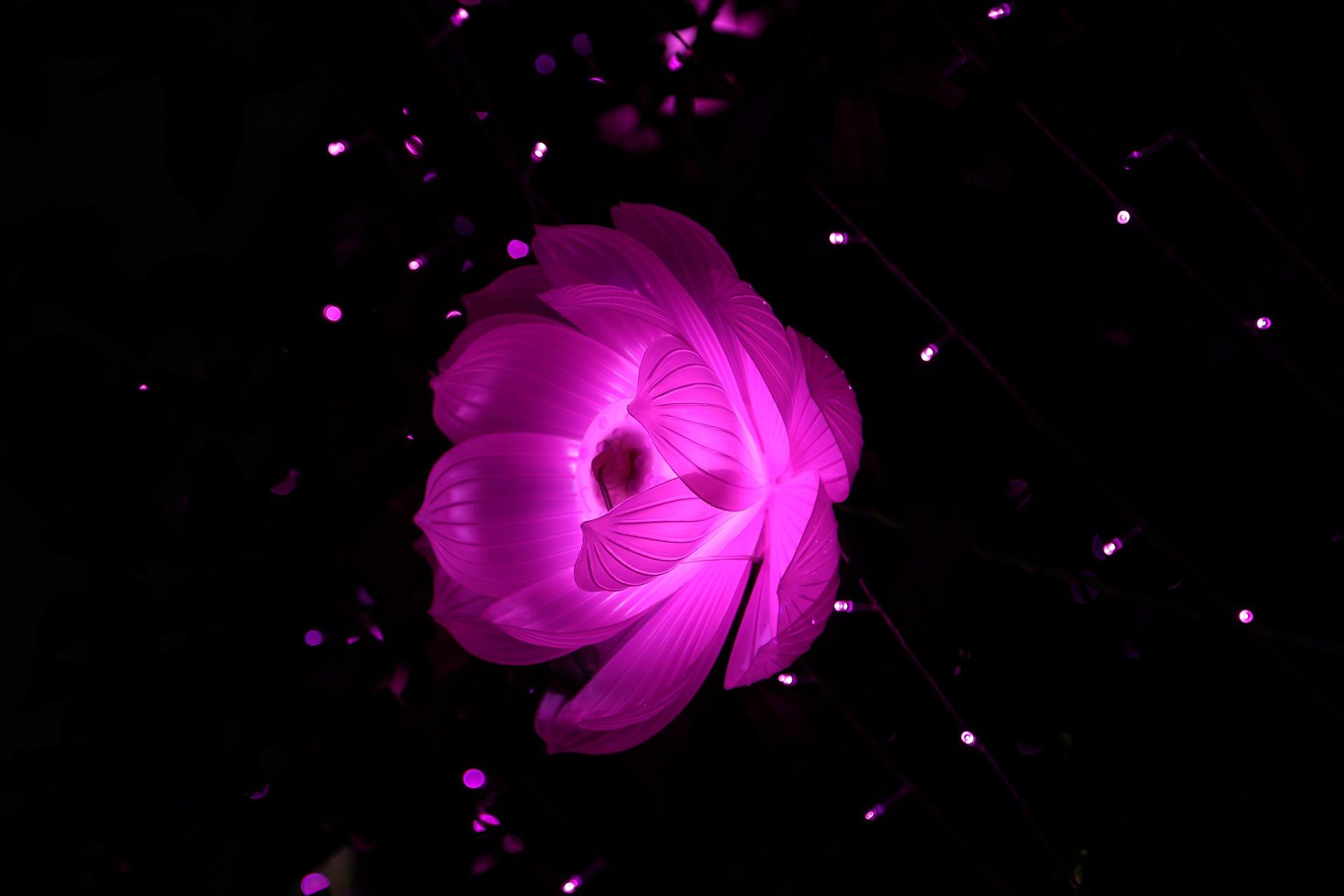 lotus-655616_1920