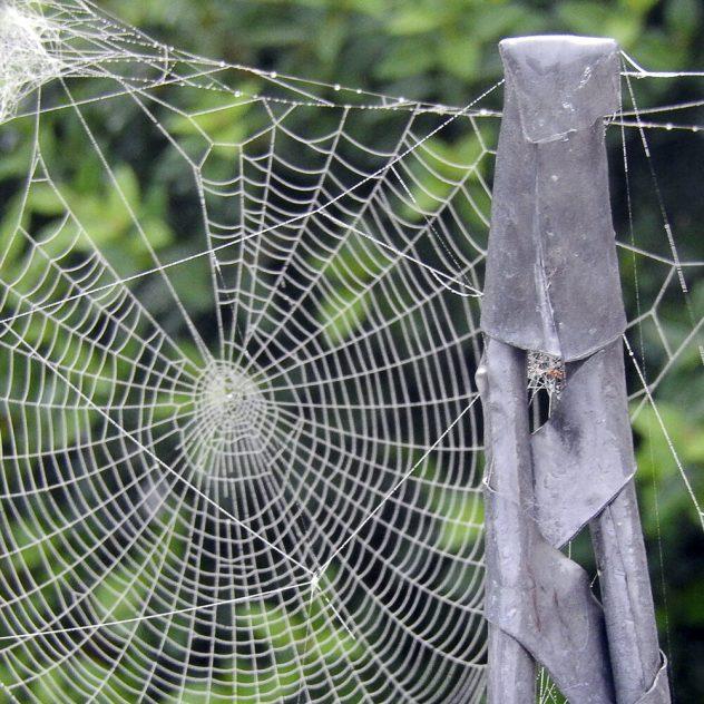2015-08-16-Spinnenweb-in-de-tuin--1_1000x1000