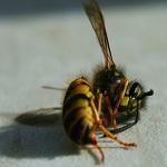 dead-bee-icon