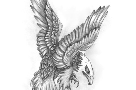 eagle tattoo drawing 2