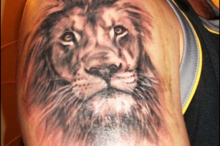 quality right shoulder lion tattoo