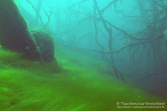Unterwasserimpressionen, Tauchen in Frose, Tauchen in Sachsen-Anhalt