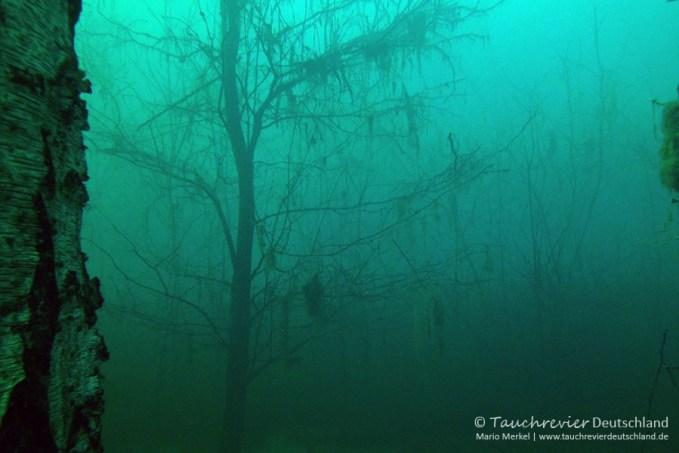 Baum, Tauchen in Frose, Tauchen in Sachsen-Anhalt