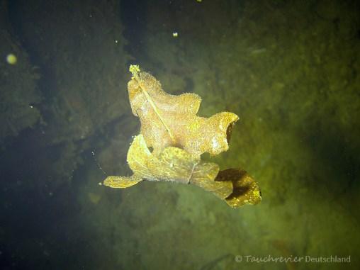 Unterwasserimpressionen, Tauchen in Pretzien