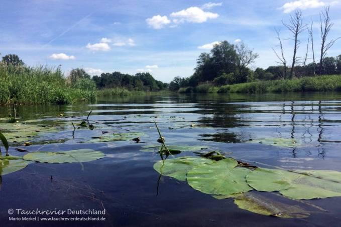 Einstieg, Flusstauchen, Tauchen in der Spree, Tauchen in Brandenburg